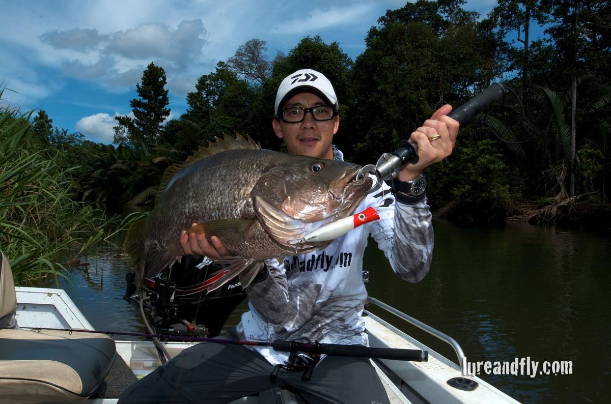 Papuan Black Bass Adventure! The Trophy fish…