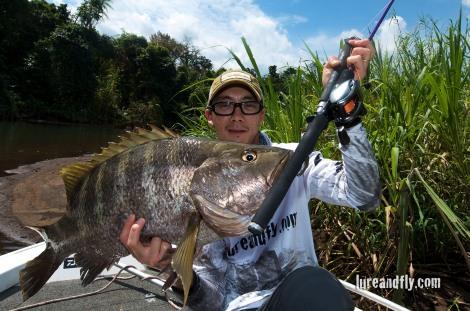 PNG Black Bass, Daiwa TMX-G 601H, Z2020