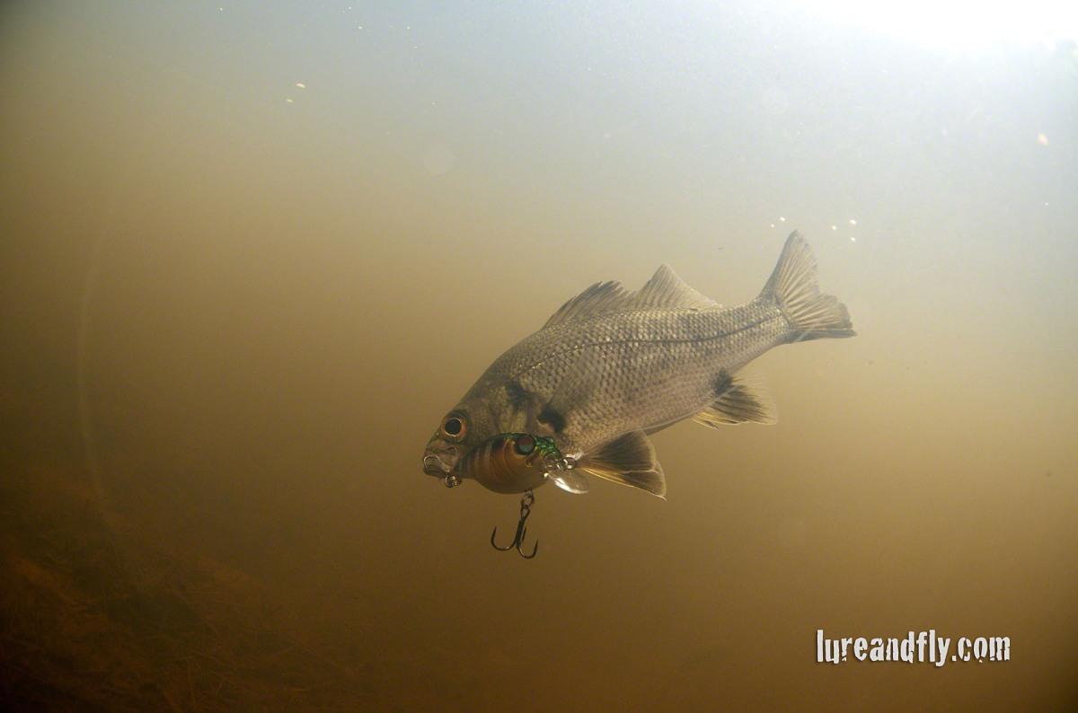 Coolendel Bass fishing 012