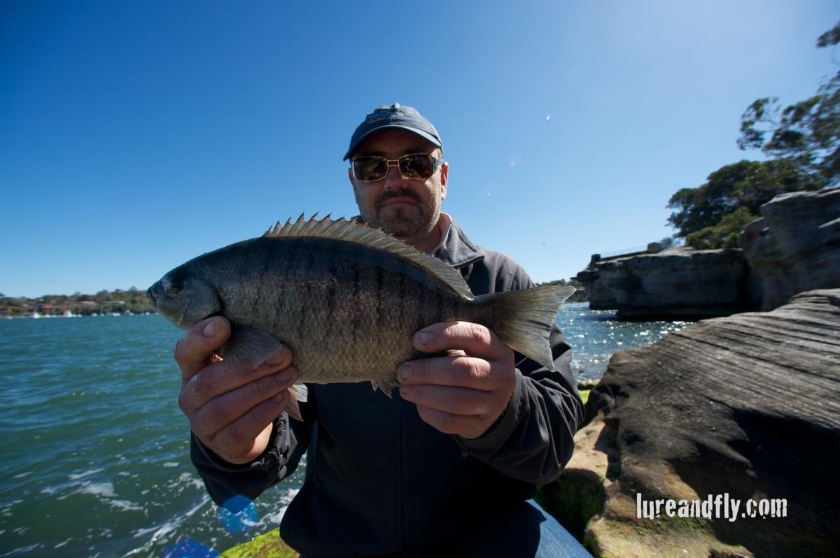 Blackfish 010