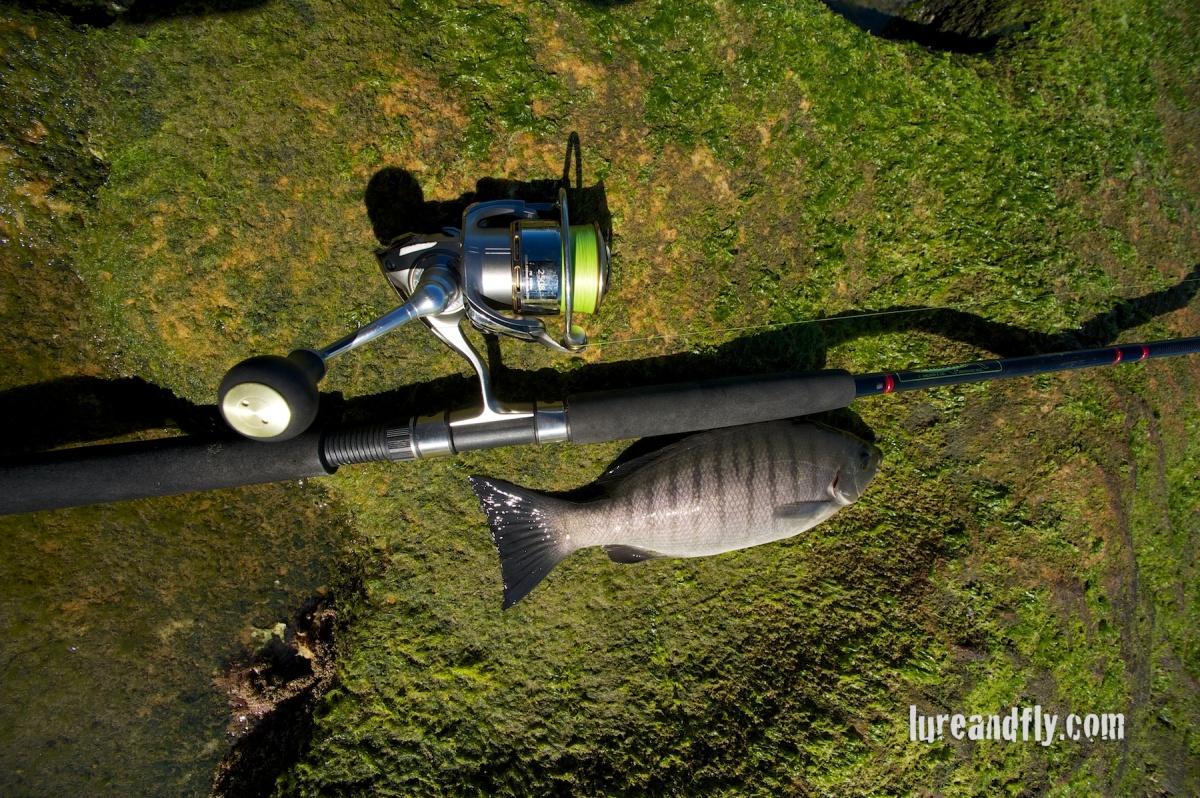 Blackfish 016