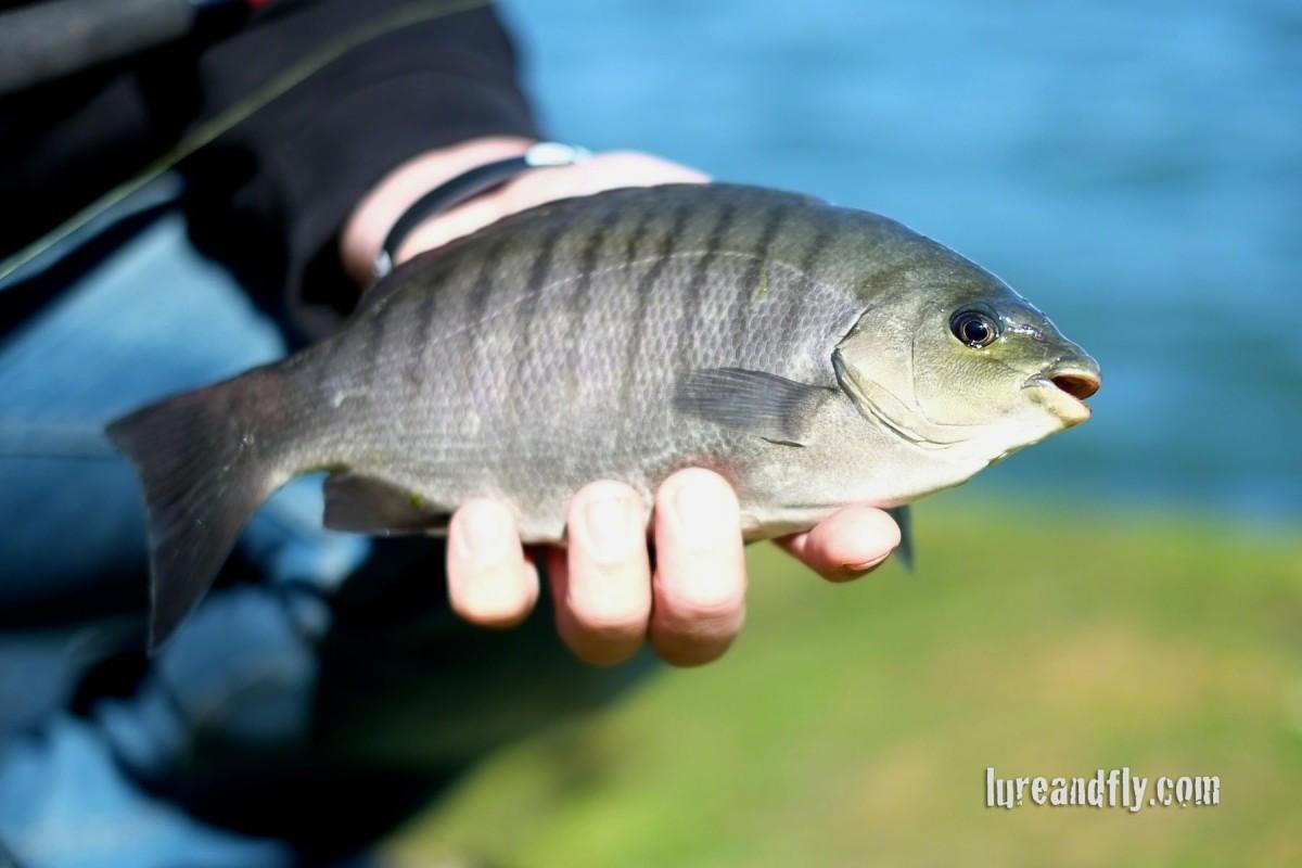 Blackfish 020