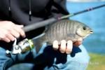 Blackfish 021