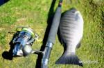 Blackfish 022