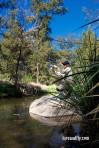 Cox's River Trout 002