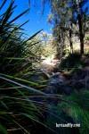 Cox's River Trout 003