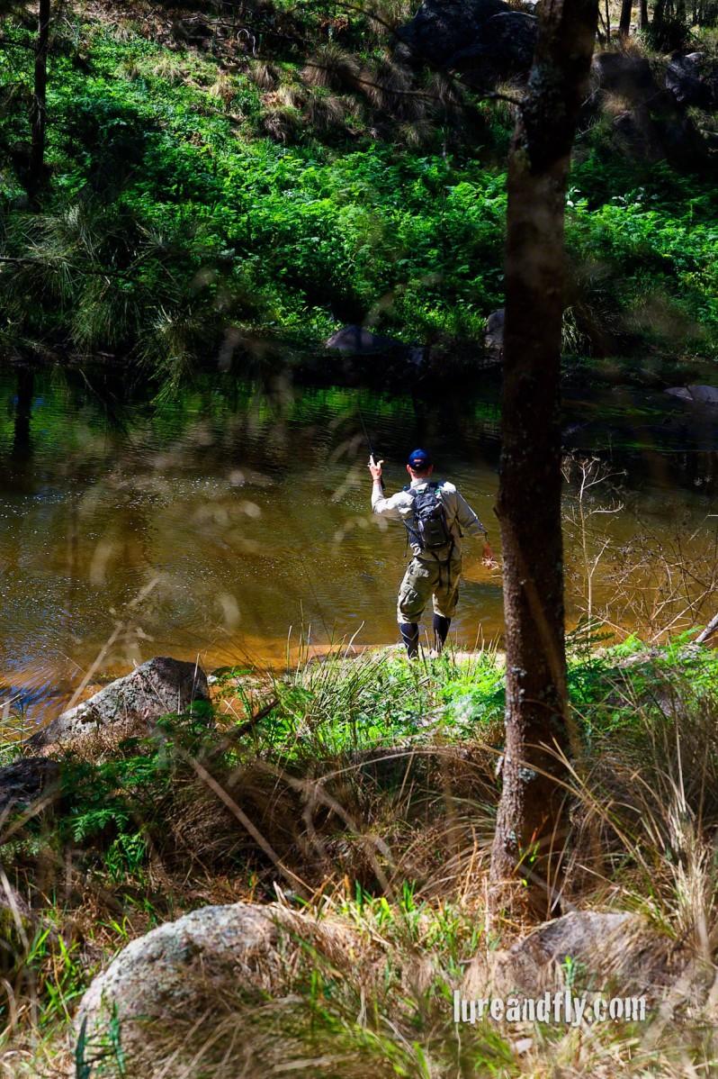 Cox's River Trout 004