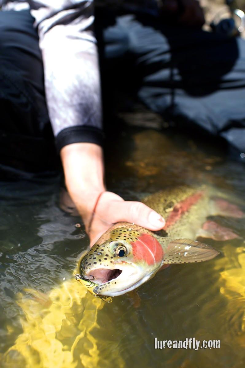 Cox's River Trout 008