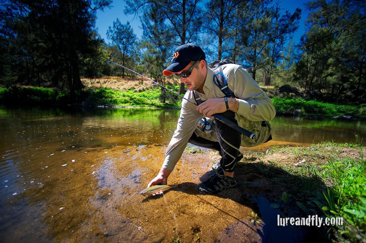 Cox's River Trout 012