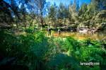 Cox's River Trout 015