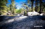 Cox's River Trout 016
