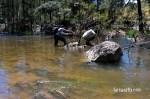Cox's River Trout 017