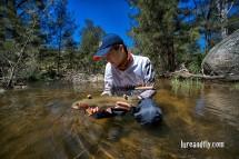 Cox's River Trout 018