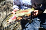 Cox's River Trout 019