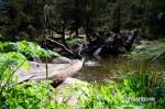 Cox's River Trout 022