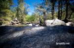 Cox's River Trout 04