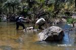Cox's River Trout 06