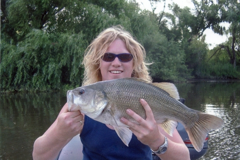 Paterson River Bass 50cm
