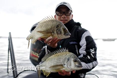 bream catch rates