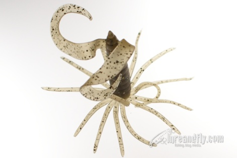 Little Spider
