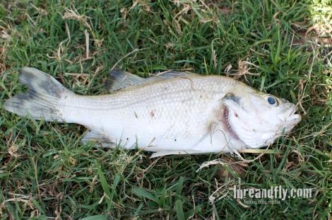 September Bass - Sydney 12092013 002