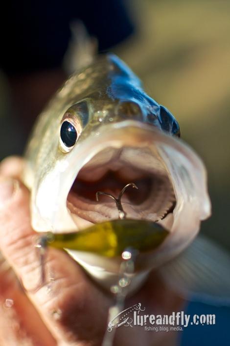 September Bass - Sydney 12092013 009