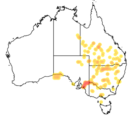 Golden Perch distribution