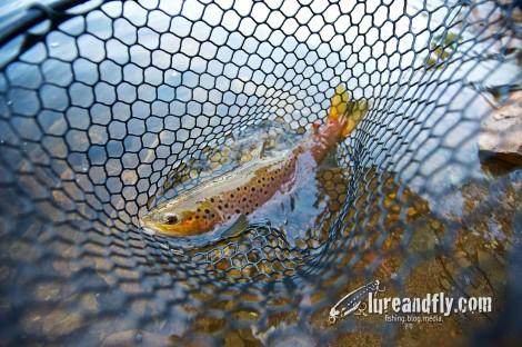 trout 04