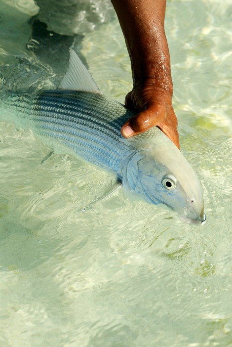 Paris Flats Bonefish
