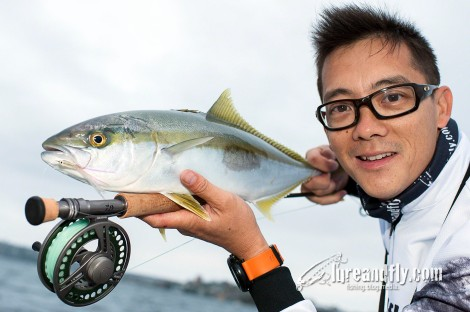Greg Seeto Sydney Harbour Kingfish