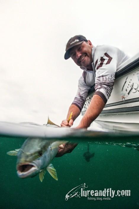 Justin Kingfish release