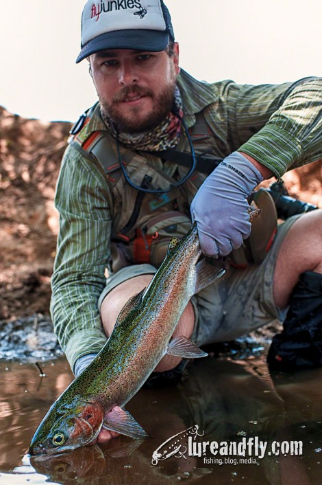 Dry Fly Trout005