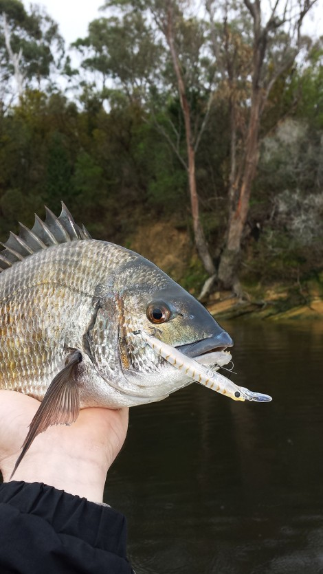 Trophy Bream 018