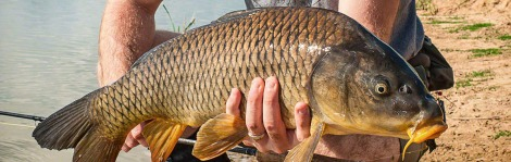Aussie Fly Fisher Big Carp feature
