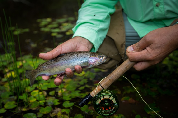 Photos courtesy of Aussie Fly Fisher