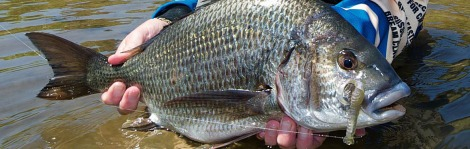 6 tips for bream on plastics - feature