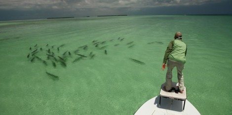 Image from http://worldangling.com/fly-fishing-for-tarpon/