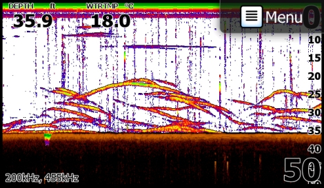 'Traditional Sonar' screen shot with a number of Bass. Image courtesy of Lee Parkhouse