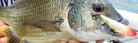Surface fishing for Bream feature