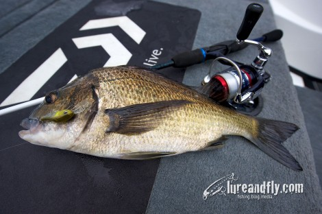 Trophy Bream 005